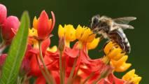 Mozirski gaj - park cvetja